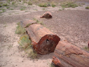 petrifiedforest_logs4.jpg